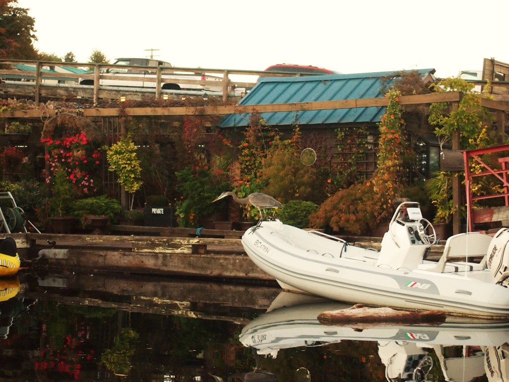A hunting heron in the Gibsons Marina, B.C