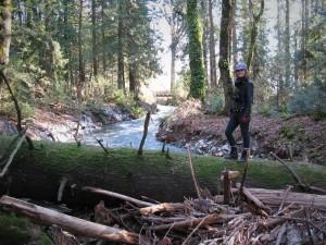 Taking advantage of a fallen tree to cross a creek