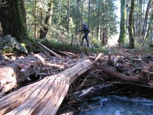 Crossing a creek on a fallen tree