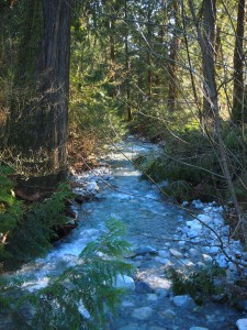 A creek in the Chehalis Flats in Harrison Mills BC