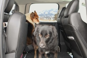 The dogs excaping the cold in the back of the truck