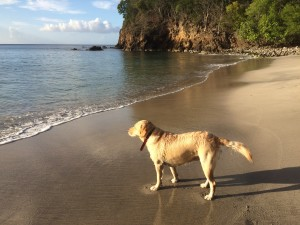 Swimming with the dog at the beach in Guadeloupe
