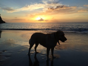 Dog and sunset on the beach in Guadeloupe