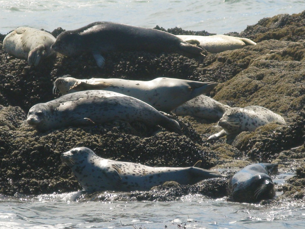 Seal watching on the Oregon Coast