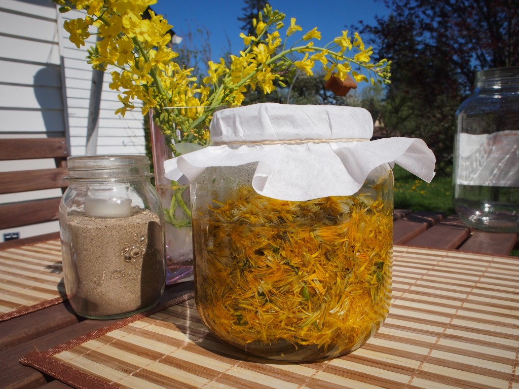 Steeping the dandelion petals to make jelly