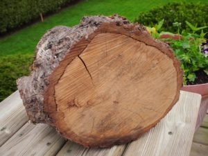 The chosen log for the mason bee house
