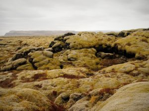 The moss covered Eldhraun lava fields in Iceland on my road trip