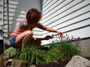 Cutting off chive blossoms for vinegar