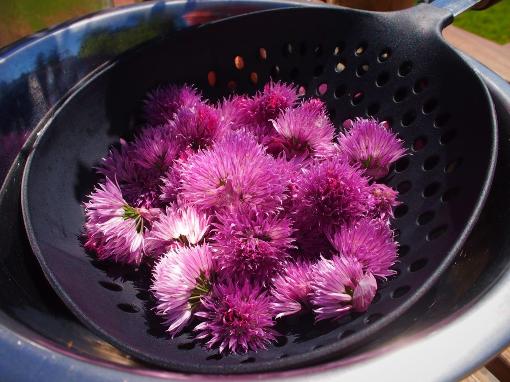 Cut chive blossoms for vinegar