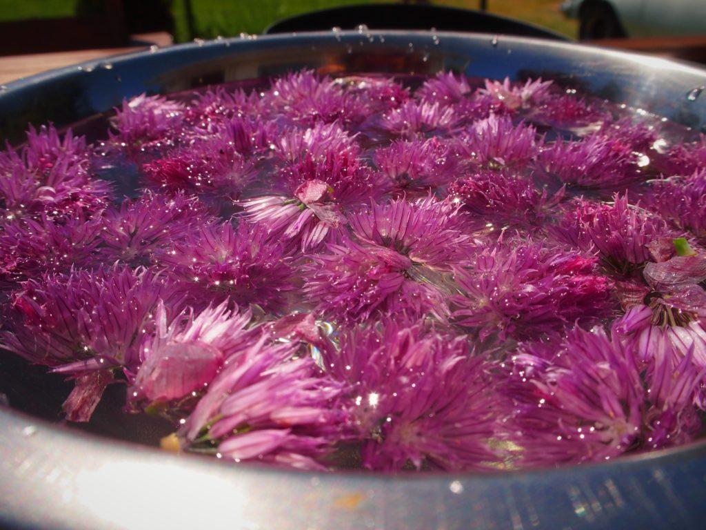 Rinsing the chive blossoms for vinegar