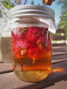 Chive blossom vinegar in mason jars