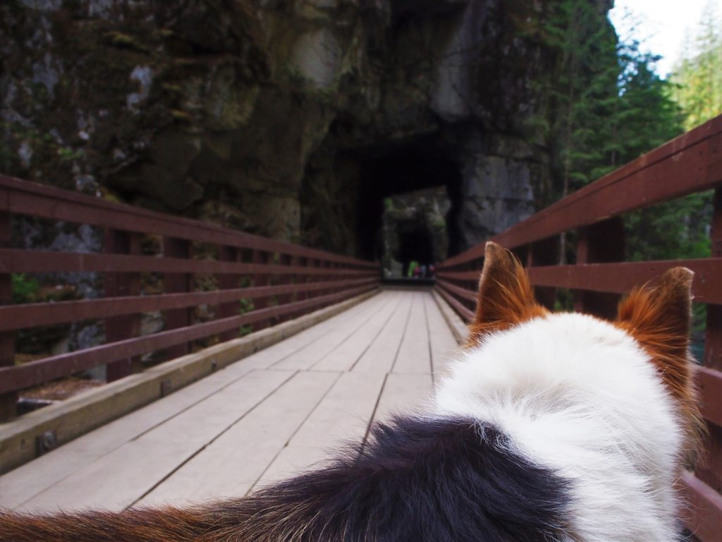 Q at the Othello Tunnels in Hope BC