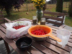 Pitting cherries to make cherry rhubarb jam