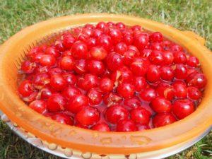 Washing the cherries to make cherry rhubarb jam