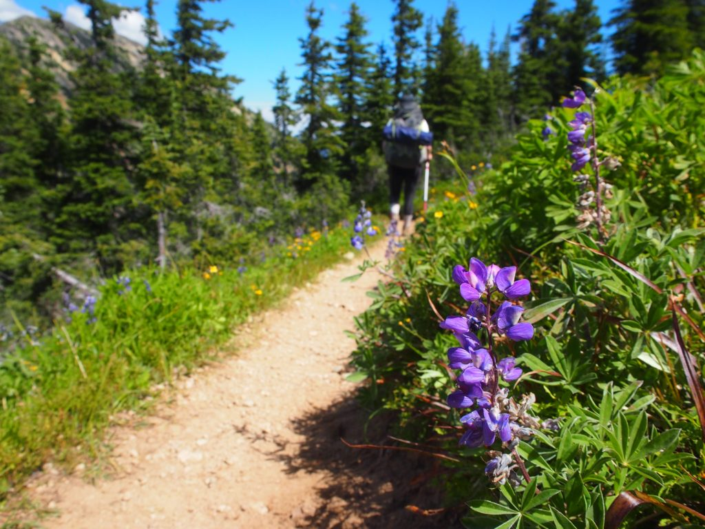 Hiking the Heather Trail during the flower bloom