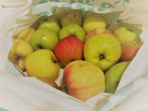 Apples to make raw apple cider vinegar